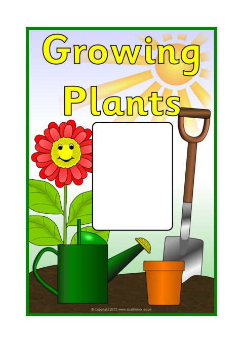 480x679 Plant Growth Primary Teaching Resources And Printables