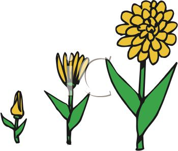 350x297 Plant Clipart Growing Stage