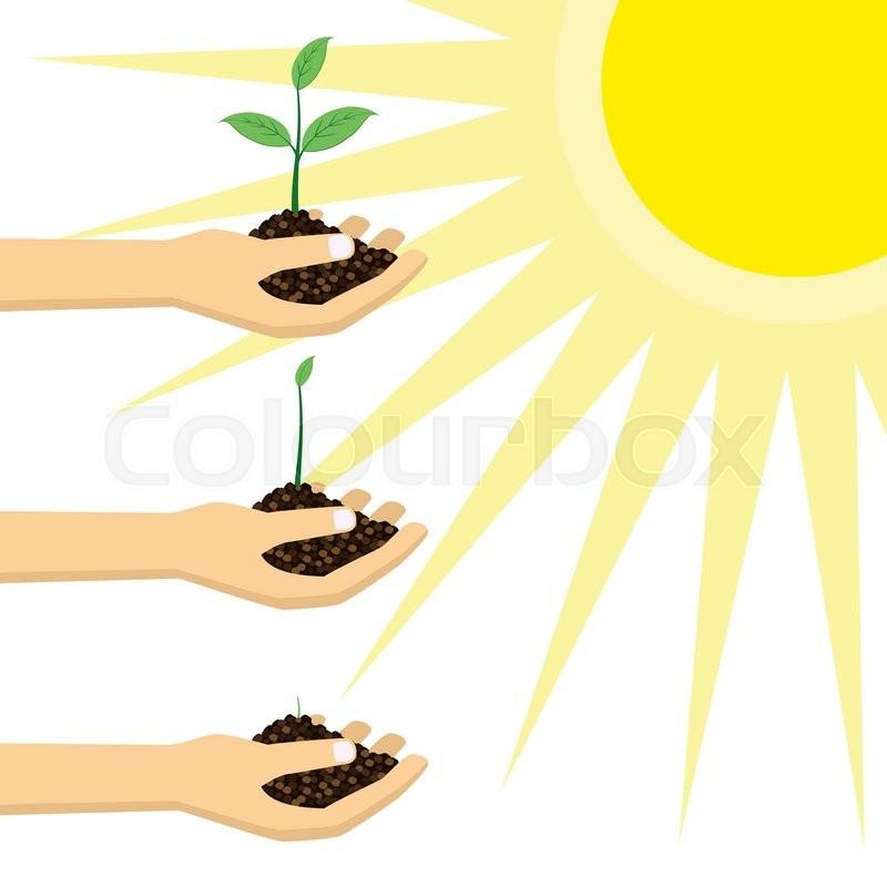 800x800 Plant Clipart Sunlight Plant