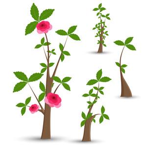 300x300 Plant Growing On Money Illustration Royalty Free Stock Image