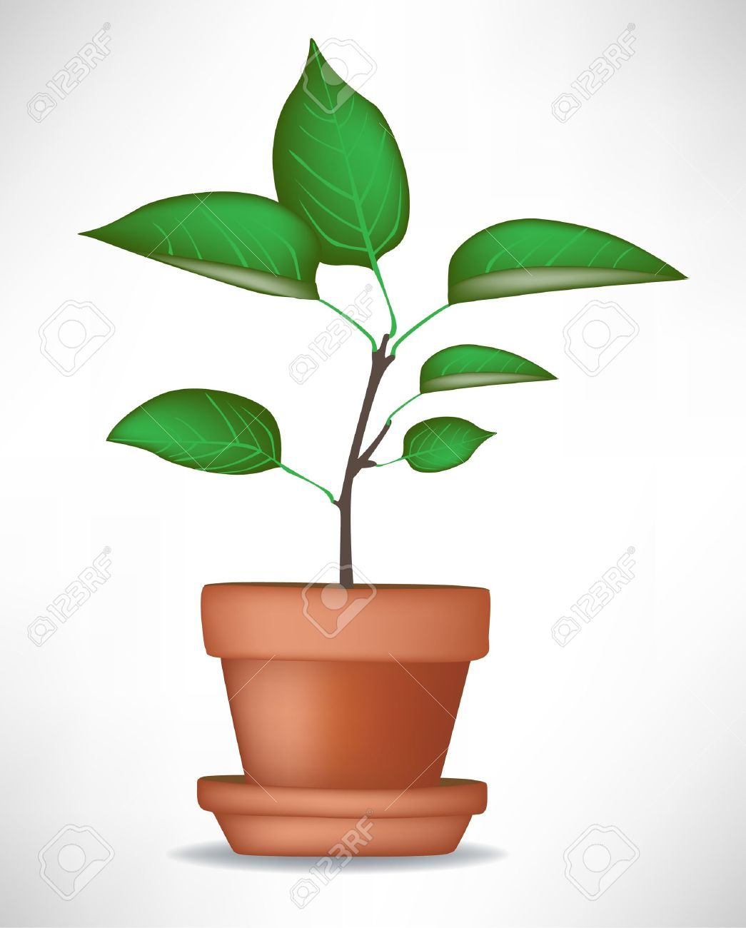 1045x1300 Pot Plant Clipart Tree Growing