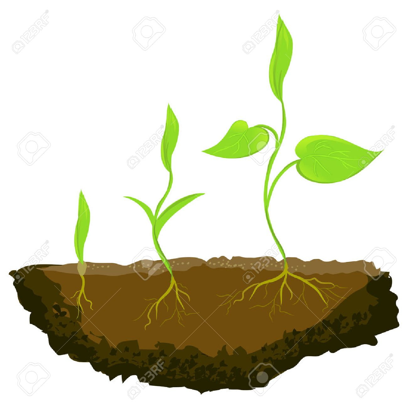 Plant illustration. Growing clipart free download