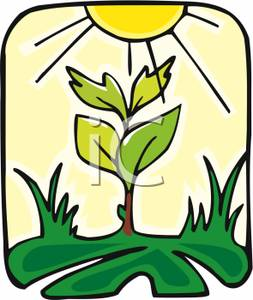 253x300 Art Image A Growing Plant Under A Yellow Sun