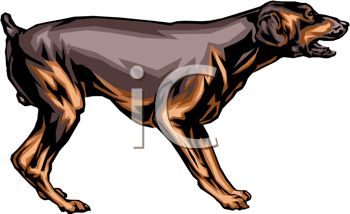 350x214 Picture Of A Doberman Standing And Growling In A Vector Clip Art