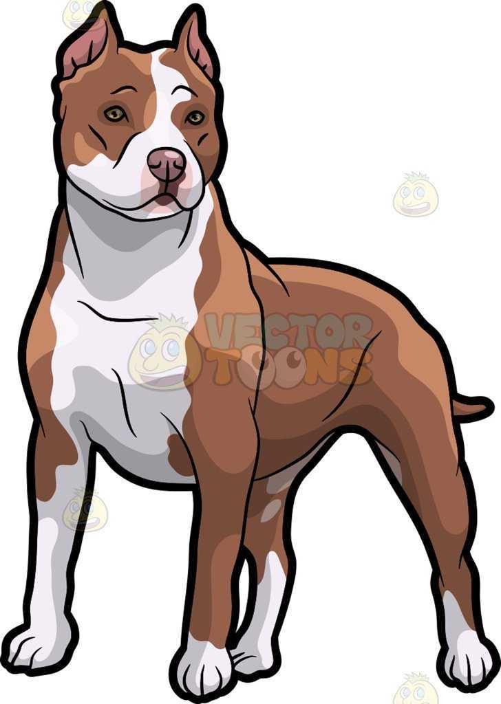 728x1024 A Pit Bull Dog On Guard Cartoon Clipart