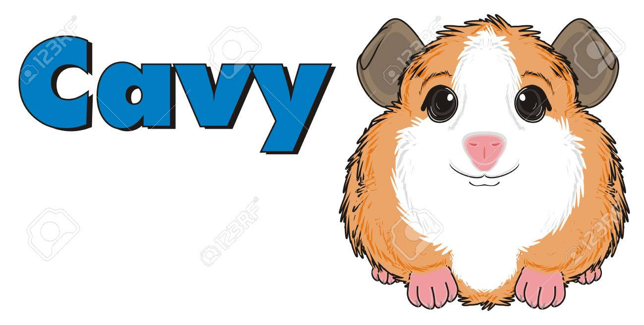 1300x657 827 Guinea Pig Cliparts, Stock Vector And Royalty Free Guinea Pig
