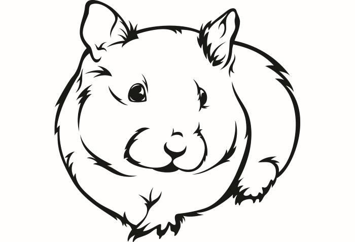 700x477 Hamster 2 Guinea Pig Mouse Gerbil Rat Rodent Animal Pet Svg