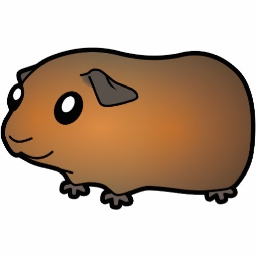 512x512 Wanted One Friendly Female Guinea Pig Want To Adopt Guinea Pigs