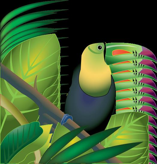 523x546 Cameleon Clipart Rainforest Habitat