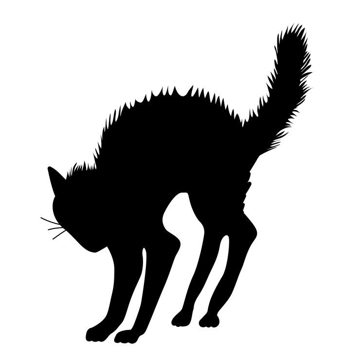 736x736 Scary Halloween Cat Clipart