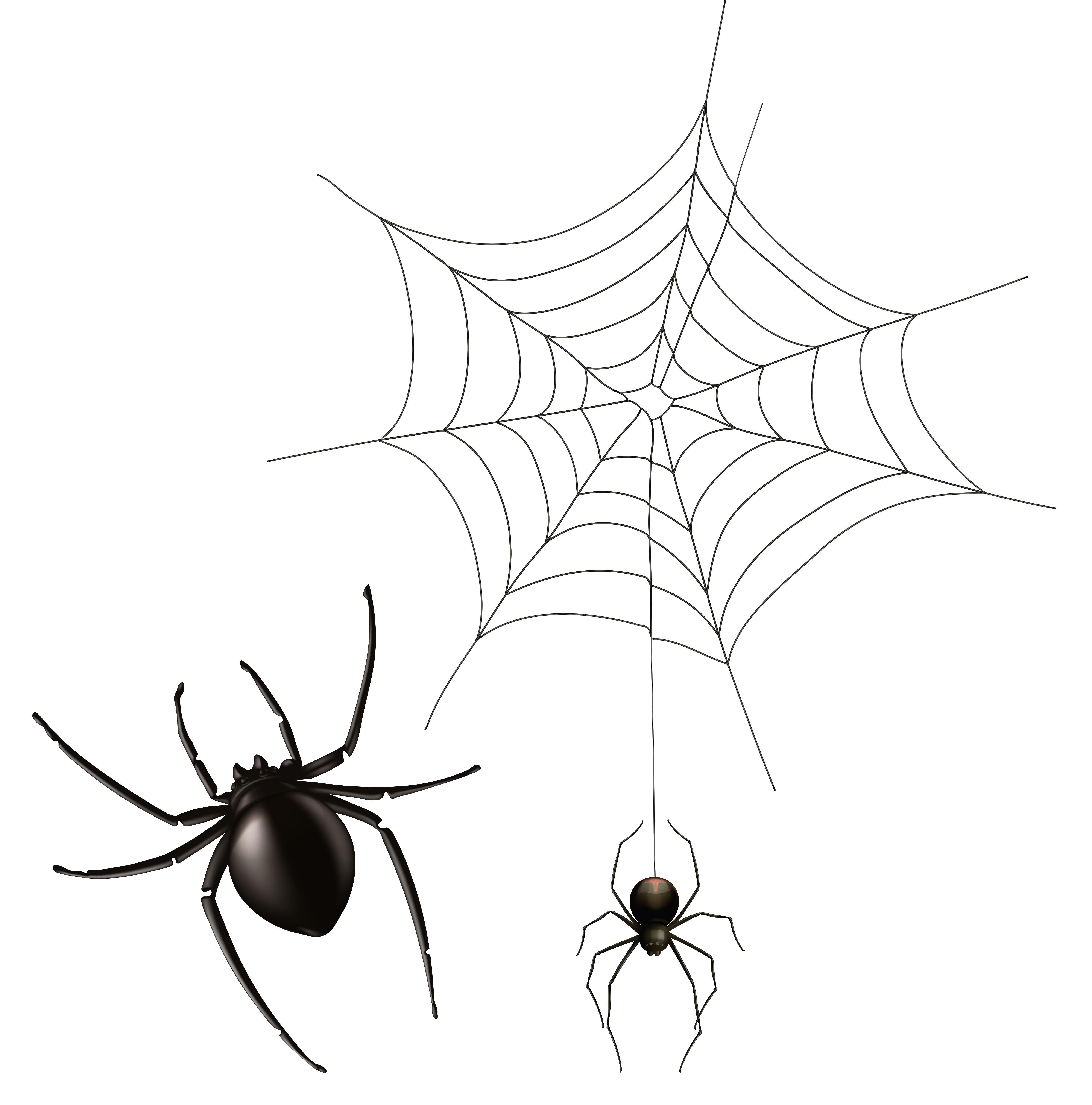 5087x5148 Spider And Cobweb Png Clipart Imageu200b Gallery Yopriceville