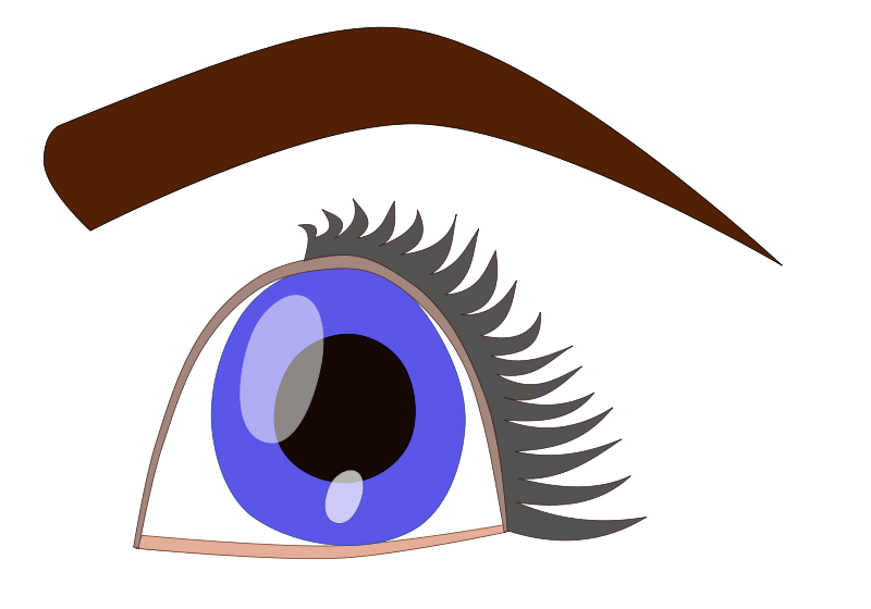 800x560 Eyeball Clip Art Download