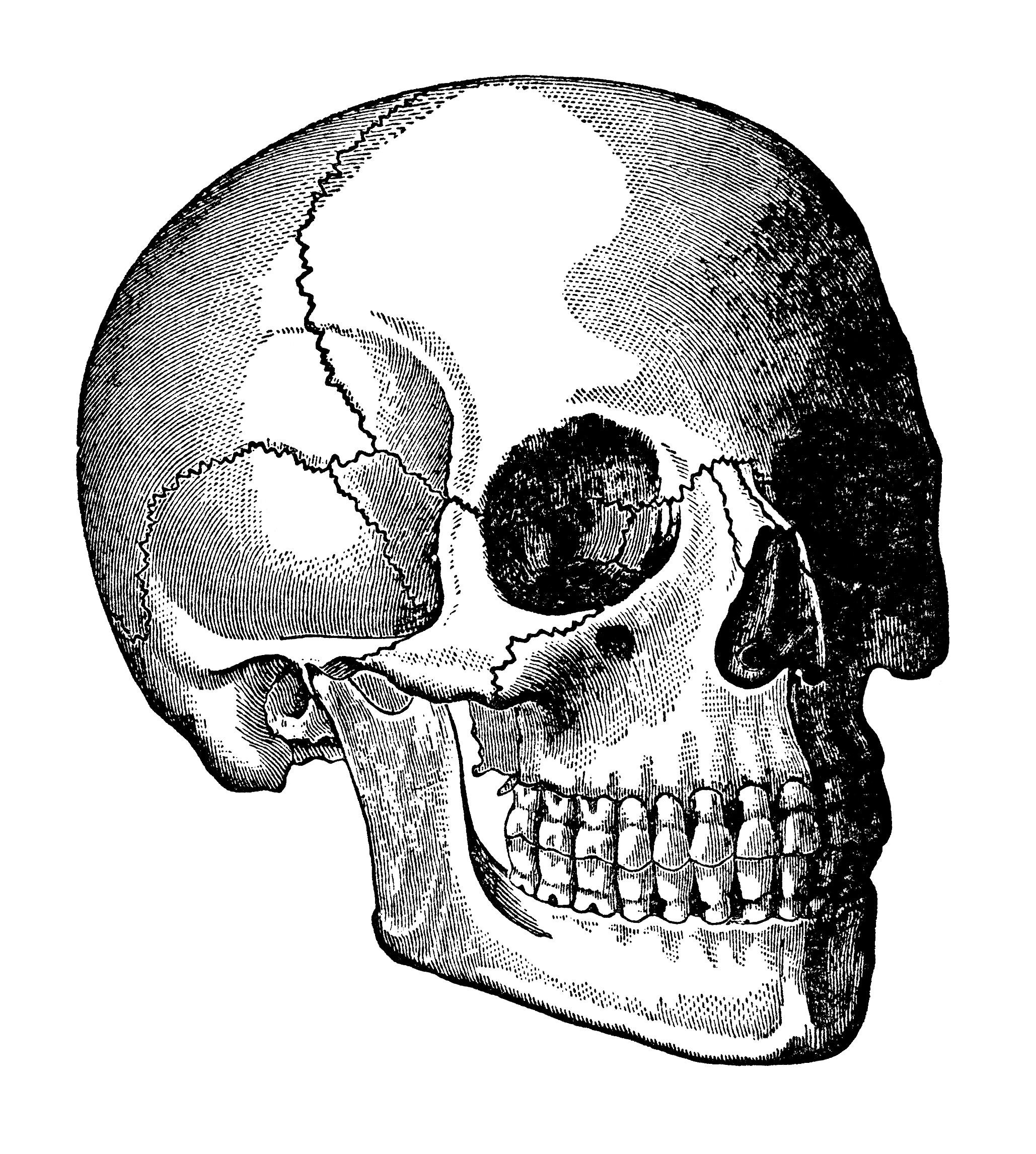 2058x2292 Head Skull Clip Art Old Design Shop Blog