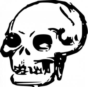 338x336 Free Skull Clipart