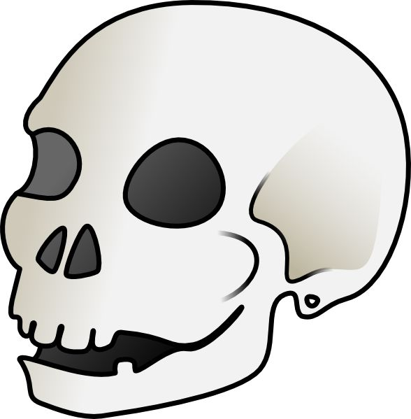 588x599 10 Best Skull Images Machine Embroidery Designs