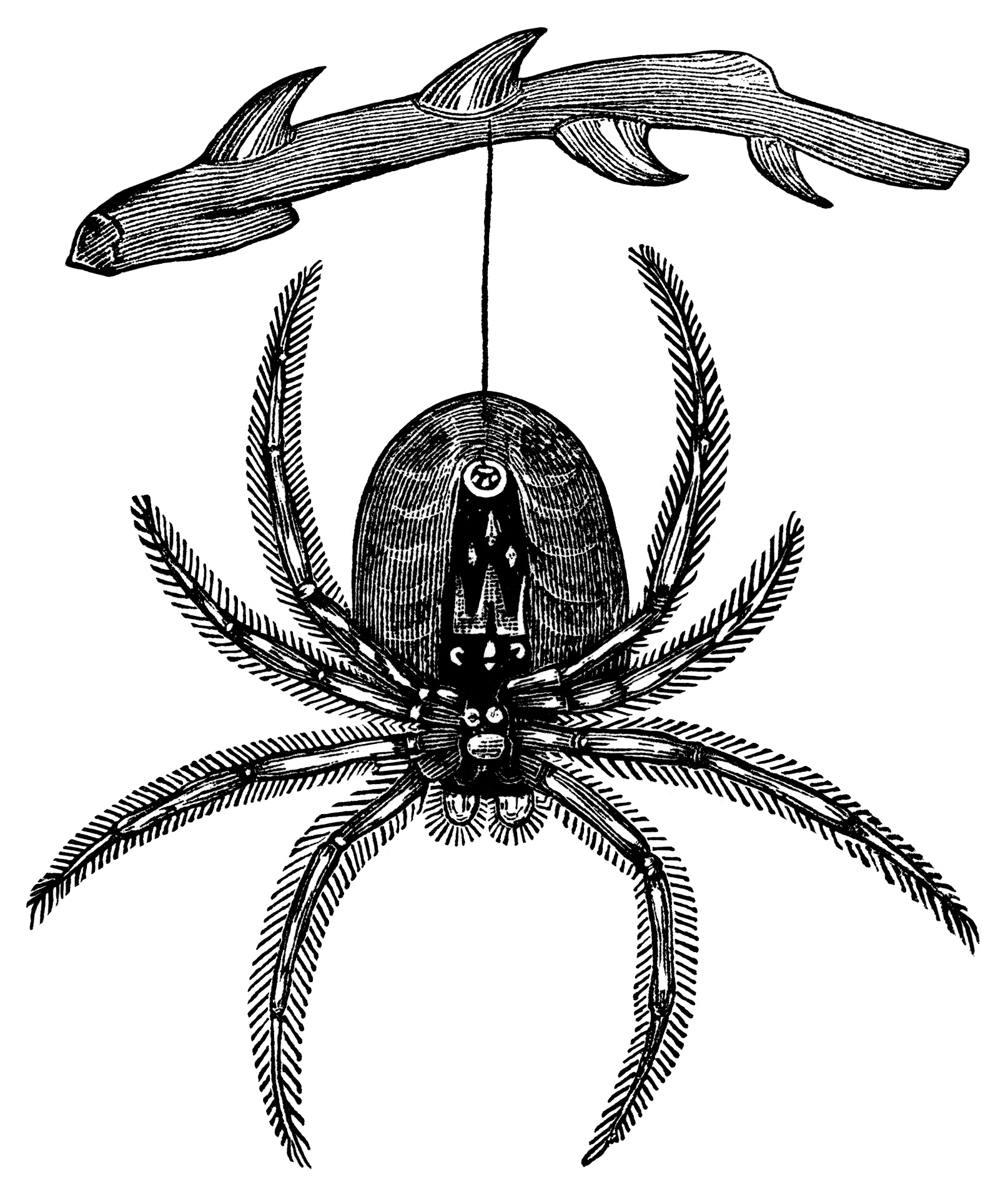 1614x1916 Halloween Black And White Hanging Spider Free Vintage Halloween
