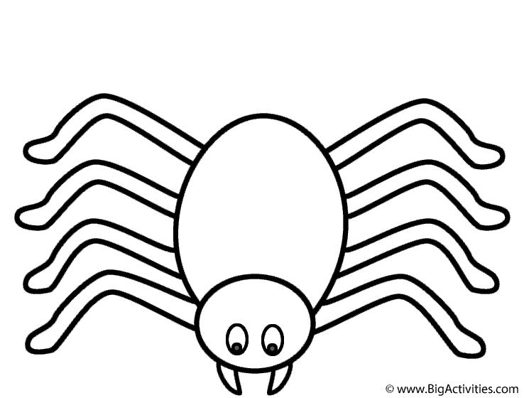 738x560 Spider