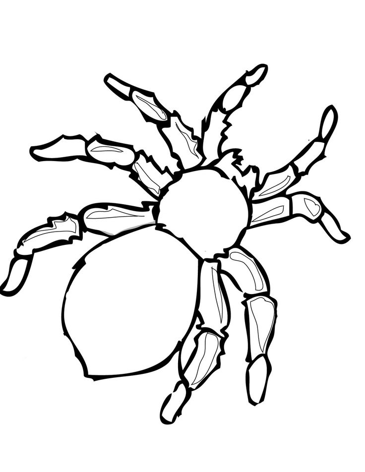 736x952 Best Spider Template Ideas Pumpkin Coloring
