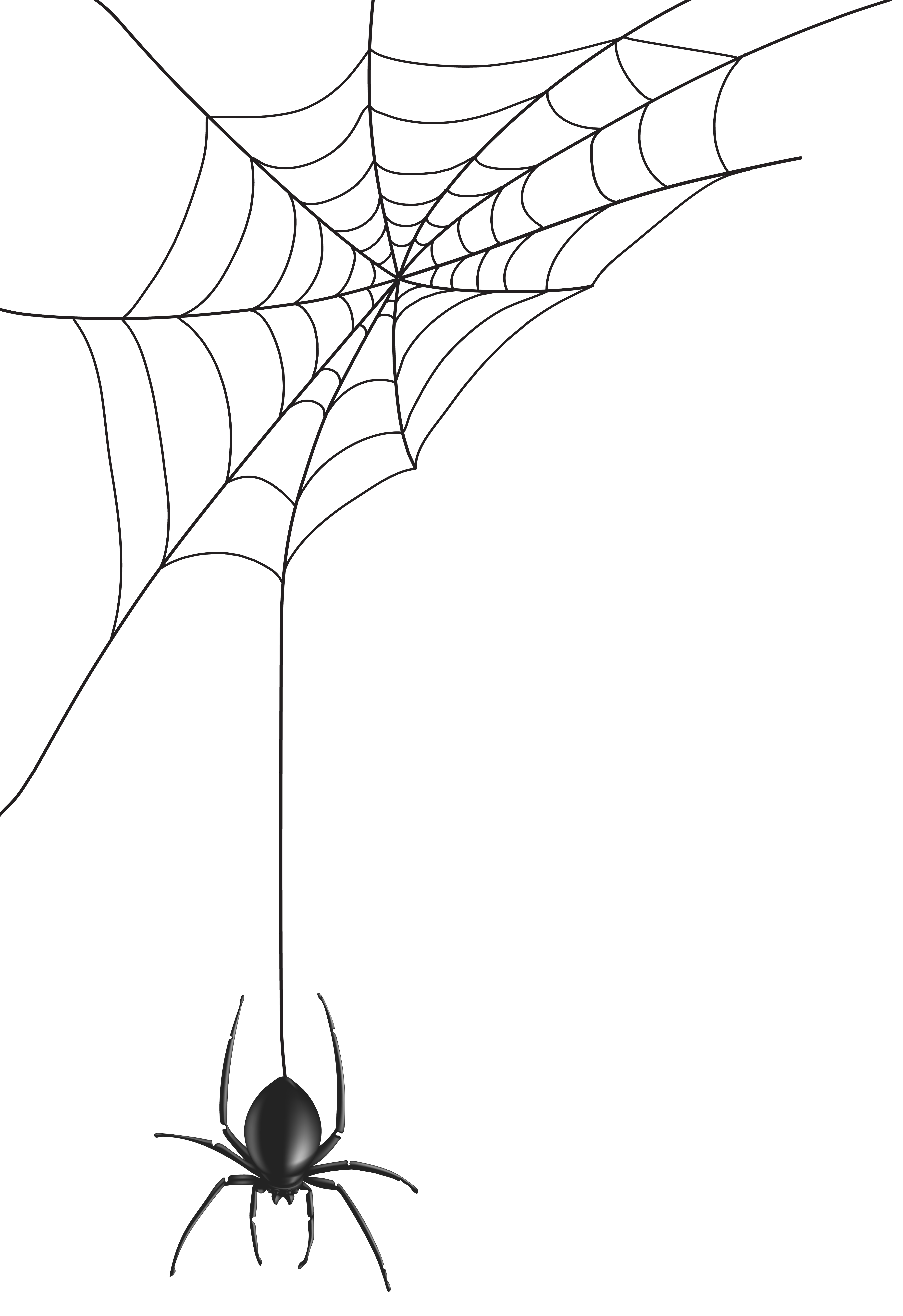 5491x8000 Spider Web Png Clip Art Imageu200b Gallery Yopriceville