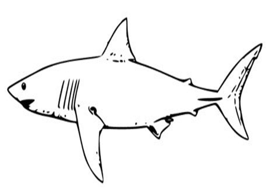 1024x728 White Shark Coloring Pages Animal Of