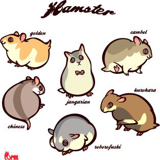 313x312 8 Best Hamster Images Beautiful, Food And Funny Sayings