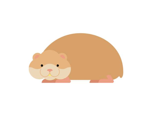 612x467 Rodent Clipart Pet Hamster