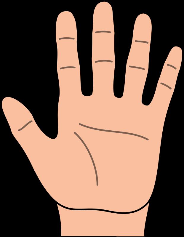 621x800 Hand Clipart
