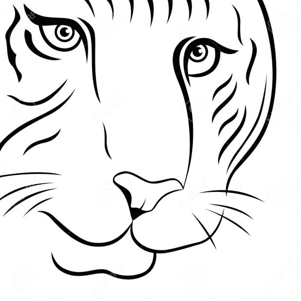618x618 Part Of Funny Tiger Face Hand Drawing Vector Outline Isolated On