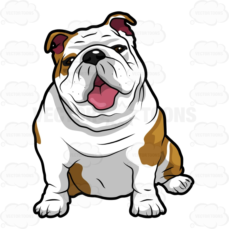 800x800 Wrinkly English Bulldog Sitting With Its Mouth Open English
