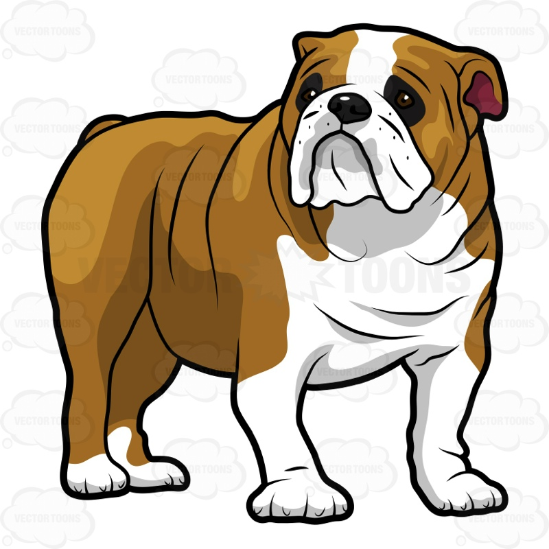 800x800 Bulldog Clipart Sad