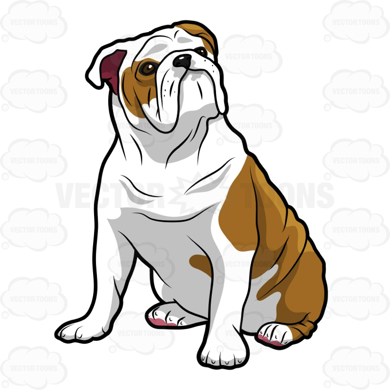 800x800 English Bulldog Sitting And Looking Left Cartoon Clipart