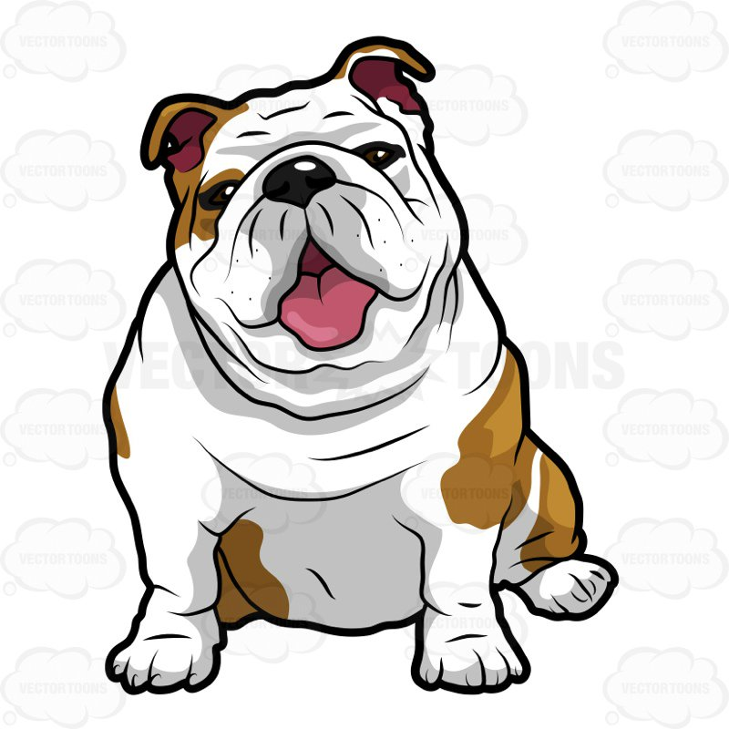 800x800 Wrinkly English Bulldog Sitting With Its Mouth Open Cartoon