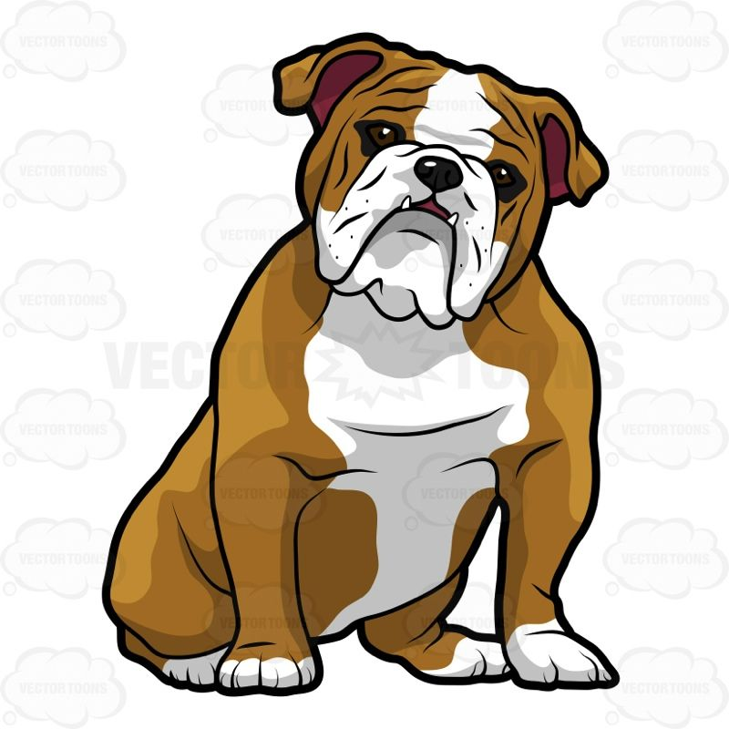 800x800 English Bulldog Line Drawing