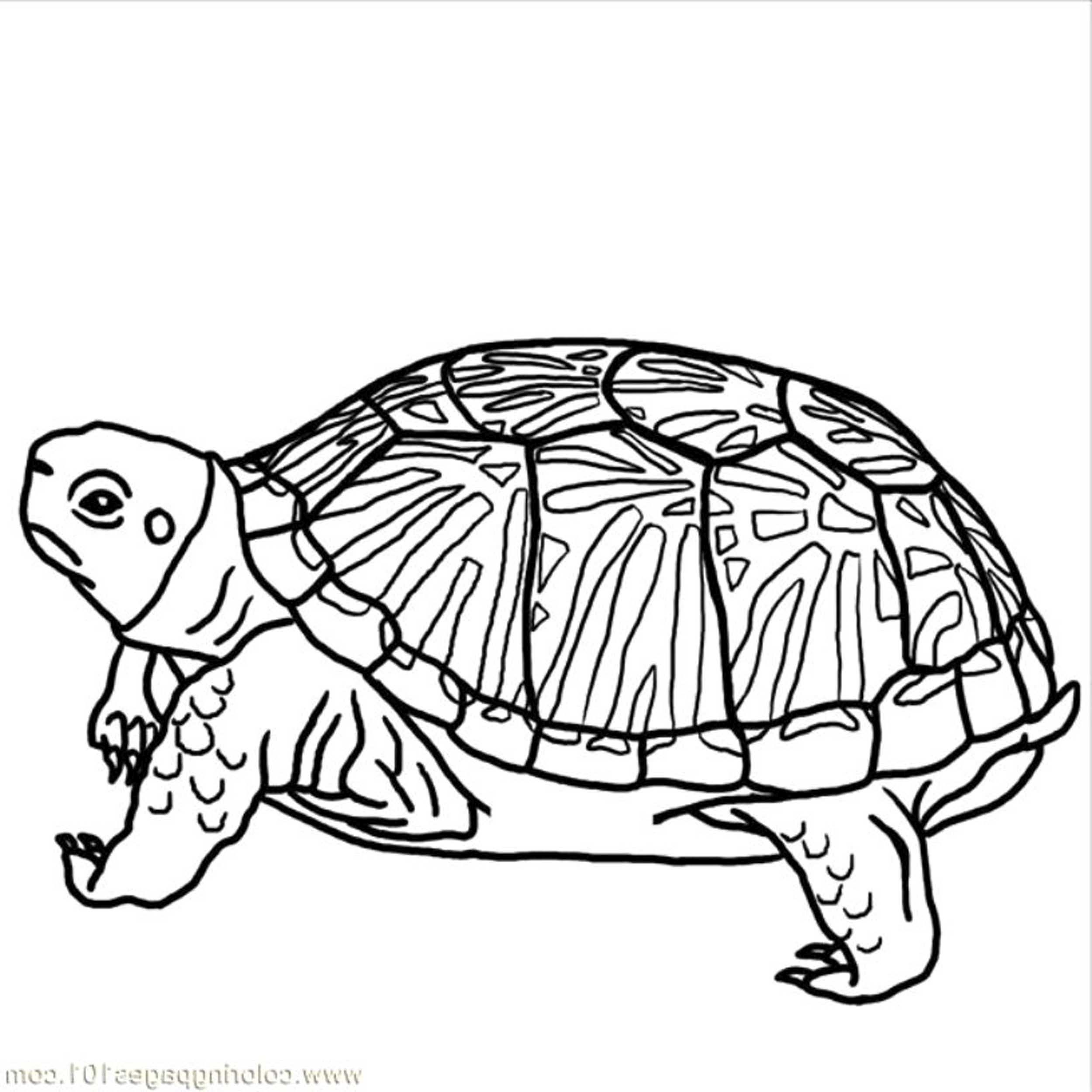 2500x2500 Hard Coloring Pages Of Animals