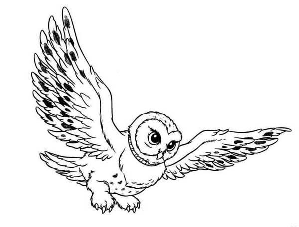 600x456 Barn Owl Clipart Harry Potter Owl