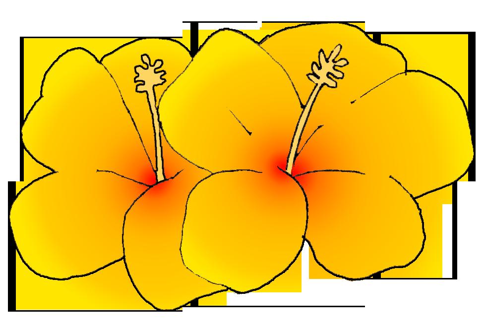 976x666 Hawaiian Flower Hawaii Clipart Summer Flower Pencil And In Color