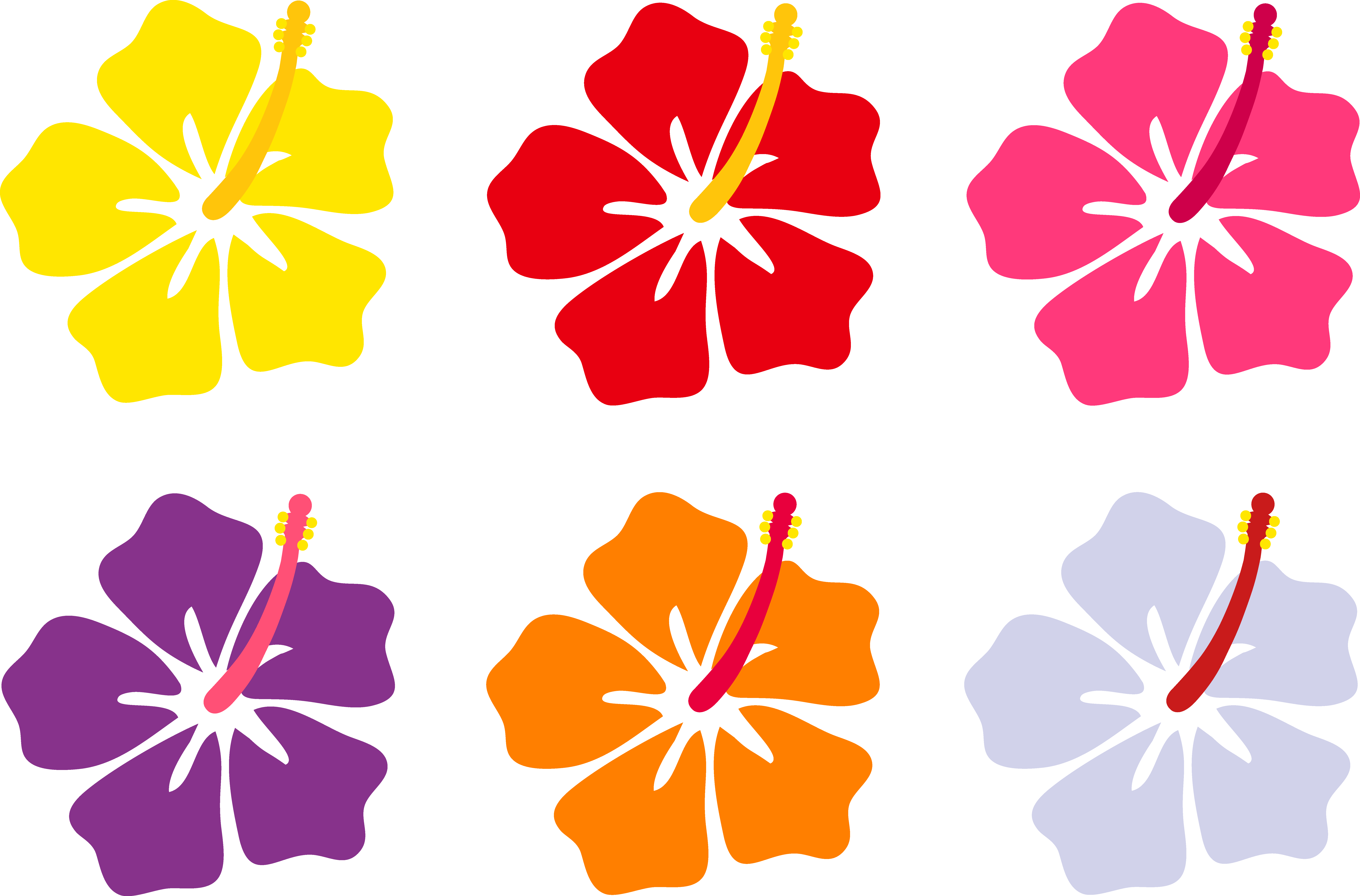 8230x5425 Hibiscus Flowers In Six Colors