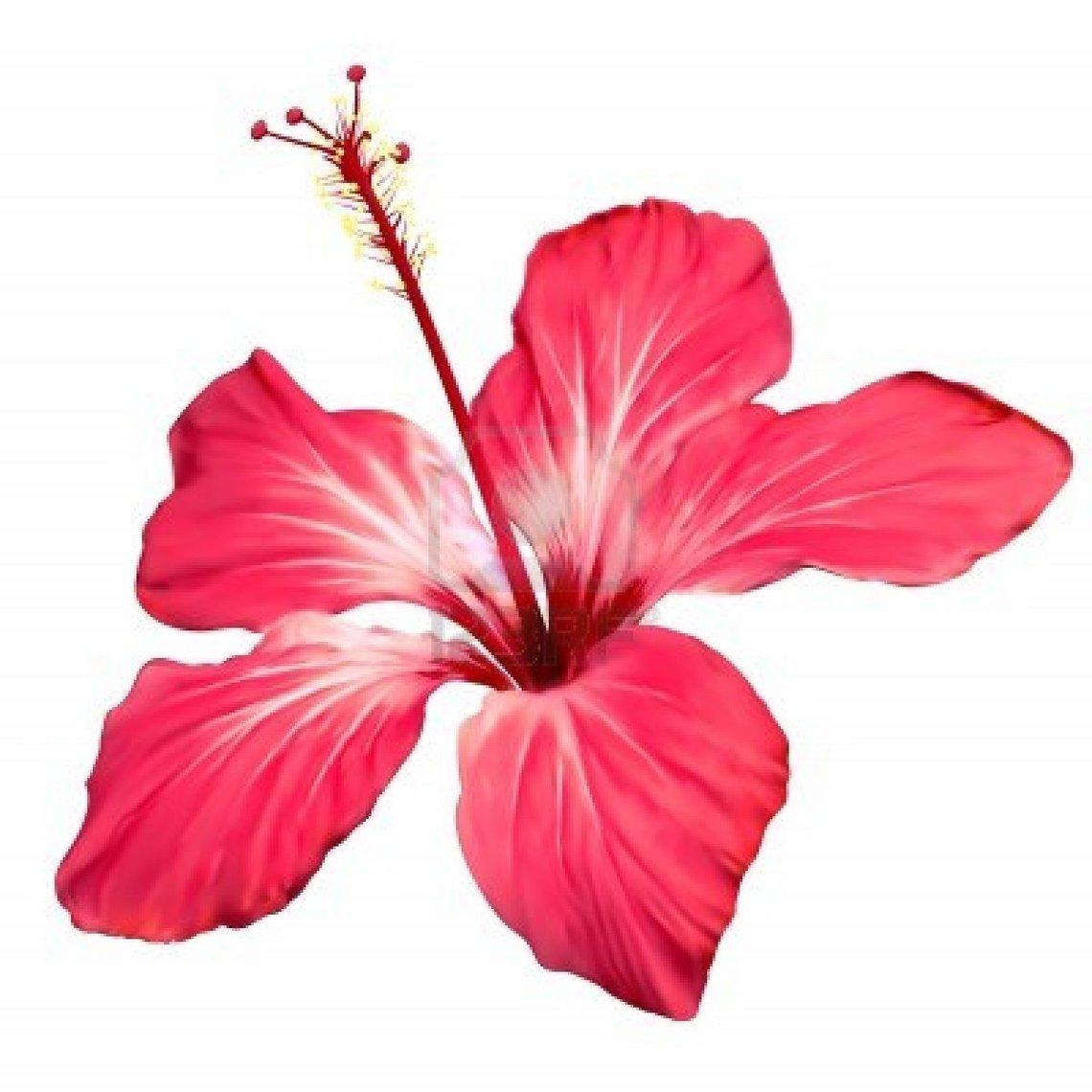 1140x1140 Hawaiian Flower Clip Art Flower Bright Hawaiian Clipart 3
