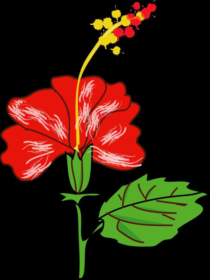 676x900 Hibiscus Flower Design