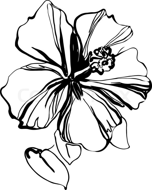 Hibiscus Tattoo Drawing: Free Download On ClipArtMag
