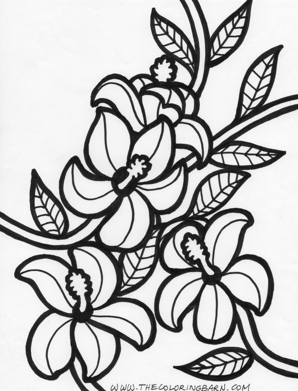 Hawaiian flower drawing free download best hawaiian flower drawing 1000x1310 beautiful hawaiian flower coloring pages 61 on coloring for kids izmirmasajfo