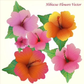Hawaiian Flower Images