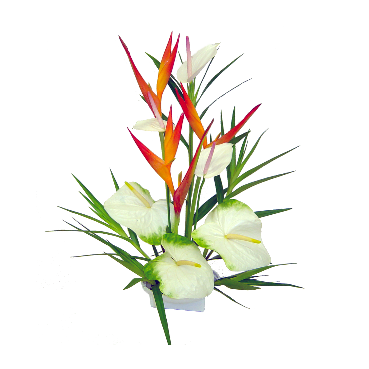 Wall Stickers Jungle Hawaiian Flower Images Free Download Best Hawaiian