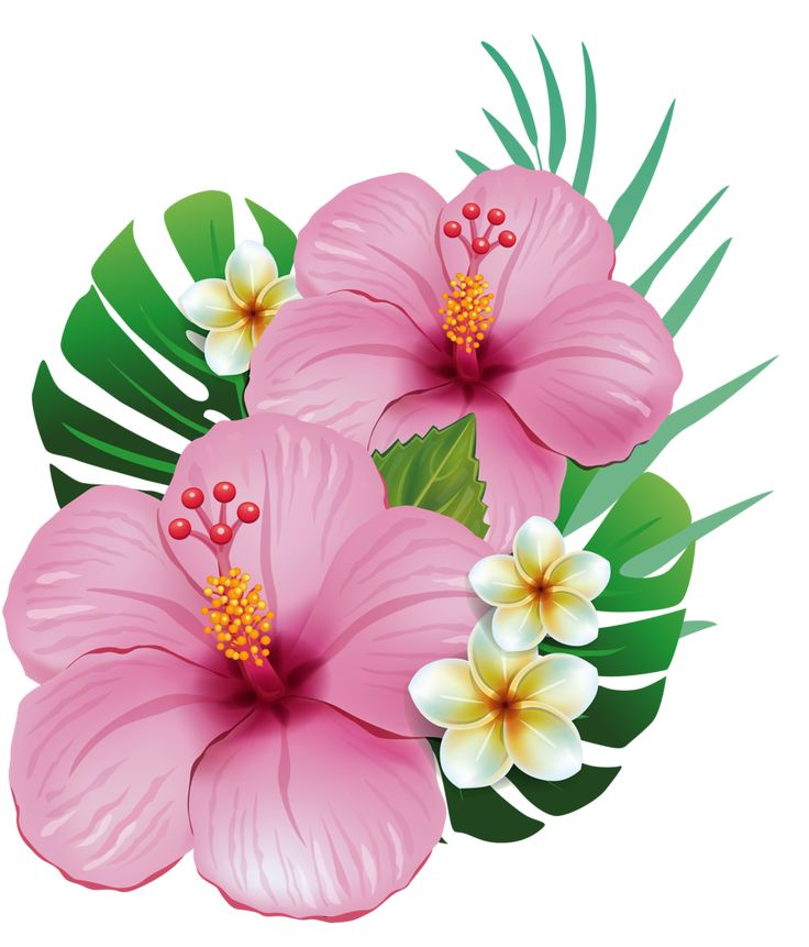 Hawaiian Flowers Clipart