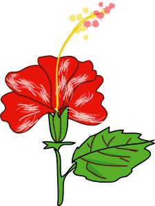 225x299 Flower Hibiscus Clip Art