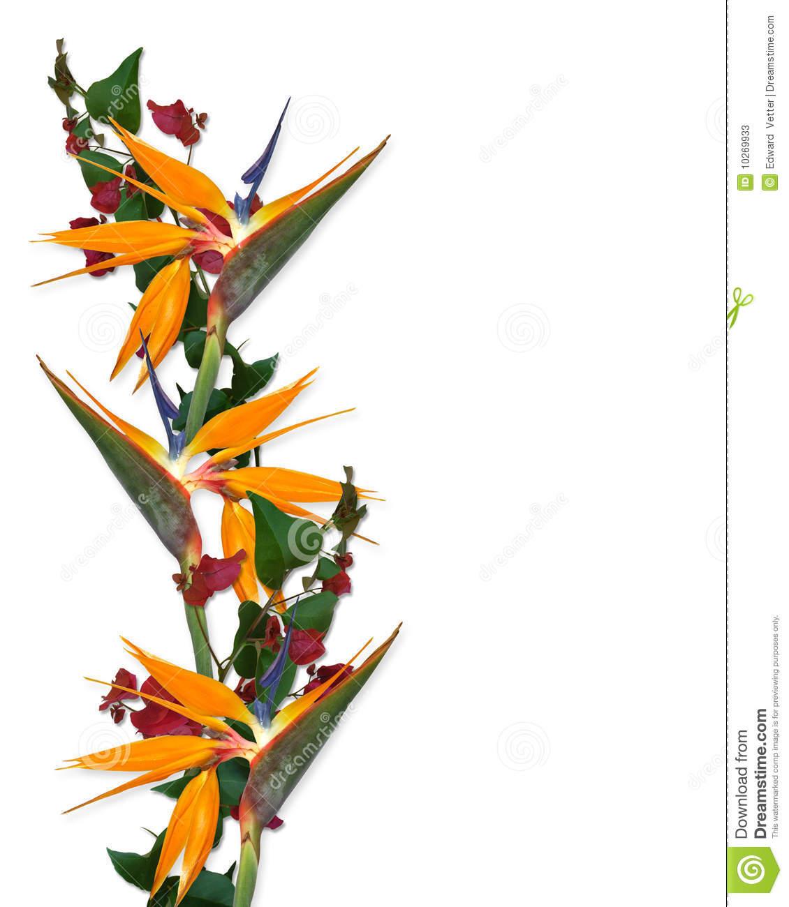 1130x1300 Hawaii Clipart Tropical Bird
