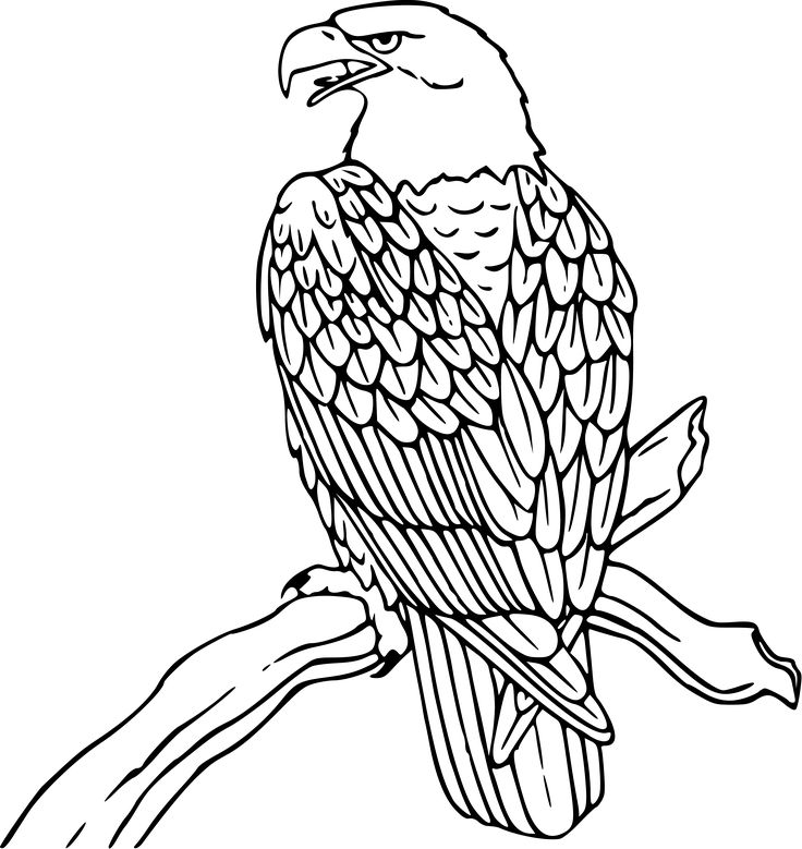Hawk Clipart Black And White