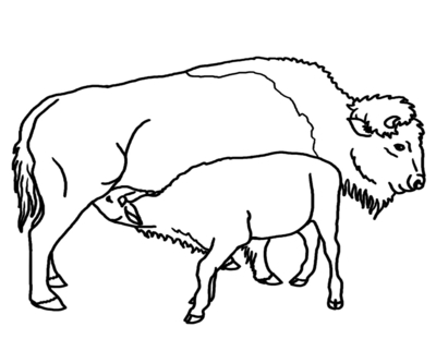 400x322 Buffalo Head Coloring Page Image Clipart Images