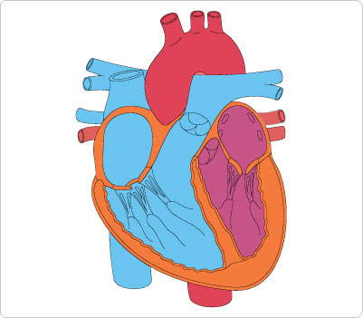 401x351 Heart Medical Cliparts Many Interesting Cliparts