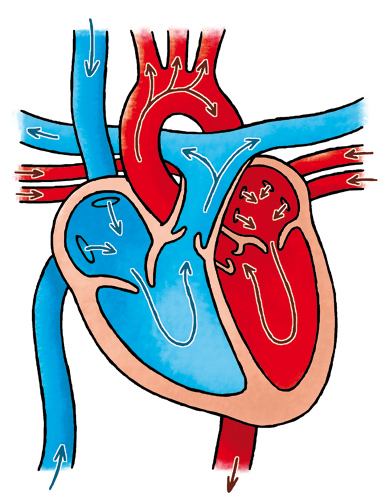 383x500 Roger Klaassen Illustratie, Strip En Cartoon Heart Amp Lungs